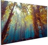 Zonlicht en planten onder water Aluminium 120x80 cm - Foto print op Aluminium (metaal wanddecoratie)