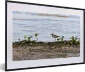 Foto in lijst - Poelruiter aan het water fotolijst zwart met witte passe-partout 60x40 cm - Poster in lijst (Wanddecoratie woonkamer / slaapkamer)