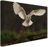 Vliegende kerkuil Canvas 60x40 cm - Foto print op Canvas schilderij (Wanddecoratie woonkamer / slaapkamer) / Dieren Canvas Schilderij