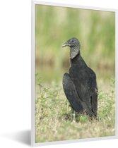 Foto in lijst - Een zwarte gier loopt in het groene gras fotolijst wit 40x60 cm - Poster in lijst (Wanddecoratie woonkamer / slaapkamer)