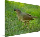 Grijsnekprieelvogel op het gras Canvas 90x60 cm - Foto print op Canvas schilderij (Wanddecoratie woonkamer / slaapkamer)