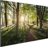 Een pad door een bosrijke omgeving Aluminium 60x40 cm - Foto print op Aluminium (metaal wanddecoratie)