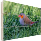 Een oranjekaakje op het gras in de schaduw Vurenhout met planken 60x40 cm - Foto print op Hout (Wanddecoratie)