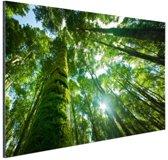 Tropische jungle in Azie Aluminium 60x40 cm - Foto print op Aluminium (metaal wanddecoratie)
