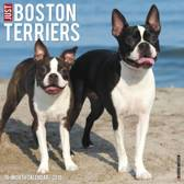 Just Boston Terriers 2019 Wall Calendar (Dog Breed Calendar)