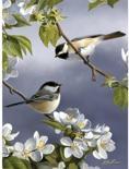 Schilderen op nummer BIRDS