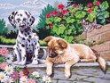 Schilderen op Nummer 'Honden'