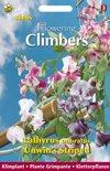 Buzzy® Flowering Climbers Lathyrus Unwin's Striped