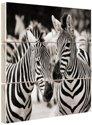 https://images.fotocadeau.nl/zebra/bs-zebra-zwart-wit-hout.jpg