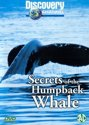 Secrets Of The Humpback Whale