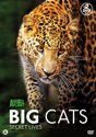 Discovery Channel : Big Cats Secret Lives