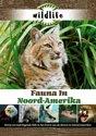 Wildlife - Fauna In Noord-Amerika