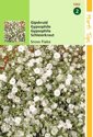 2 stuks Hortitops Gypsophila Paniculata Snow Flake Dubbel. Wit