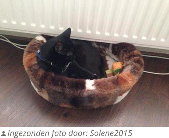 Petcomfort Bontmand Lapjesdeken - Kattenmand - 40 cm - Beige