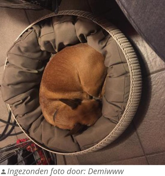 Curver Cozy Pet Bed Kattenmand - Ø 50 cm - Crème